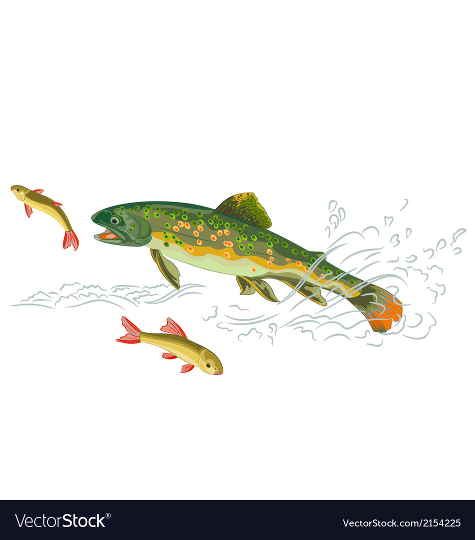 Brook-trout-predator-catch vector | Price: 1 Credit (USD $1)