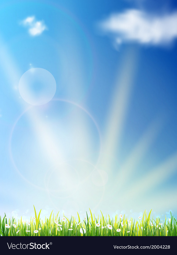 Camomiles in a rays of evening sun vector | Price: 1 Credit (USD $1)