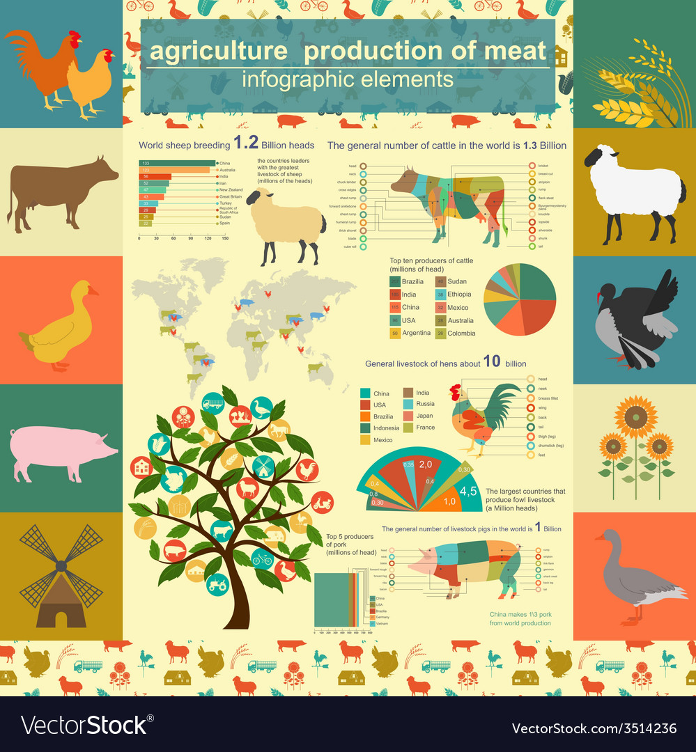 Agriculture animal husbandry infographics vector | Price: 1 Credit (USD $1)
