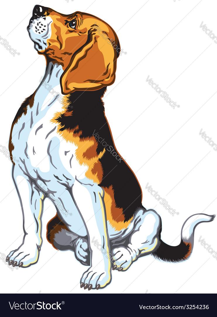 Sitting beagle vector   Price: 3 Credit (USD $3)