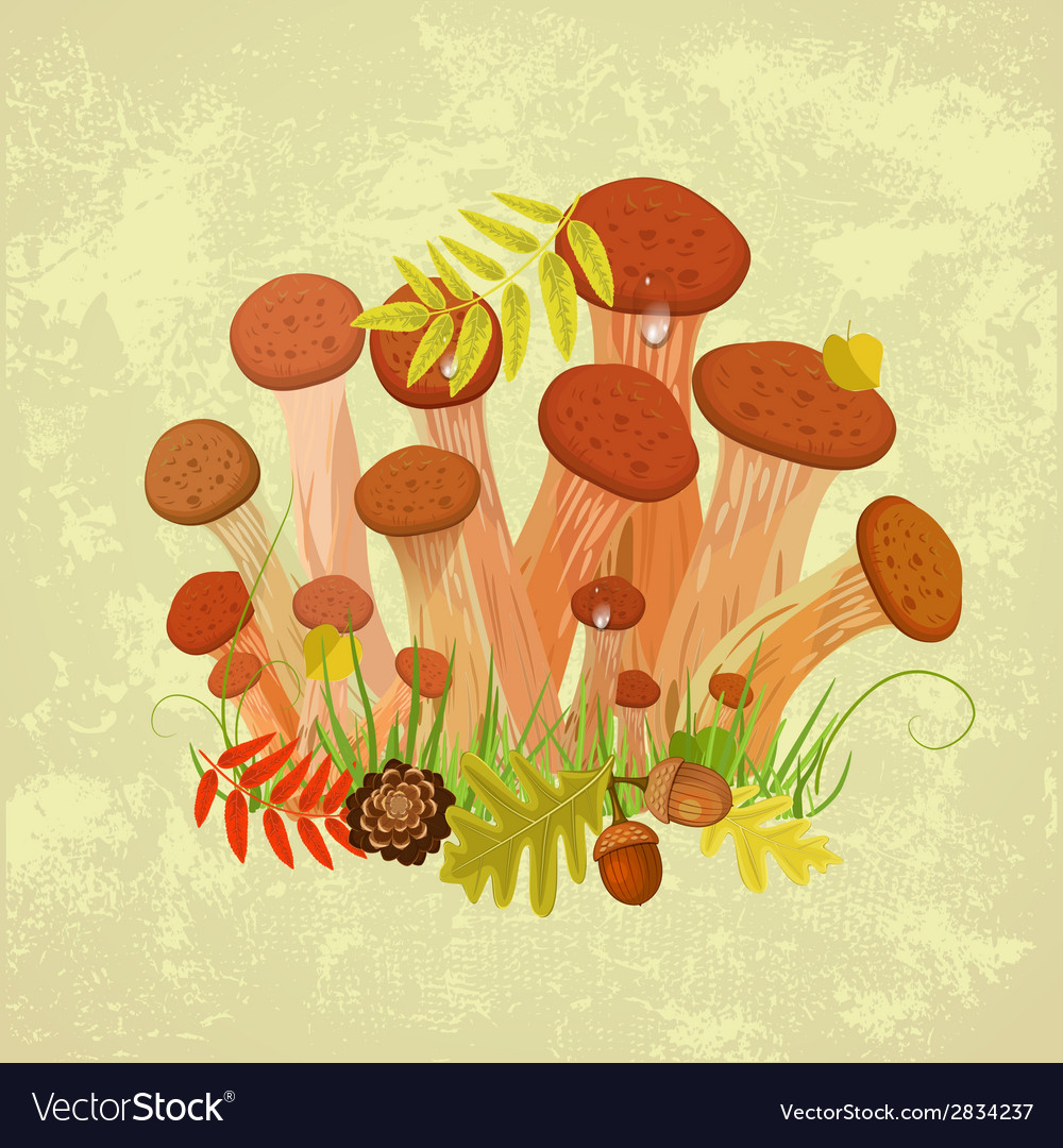 Edible mushroom armillaria for you design vector | Price: 1 Credit (USD $1)