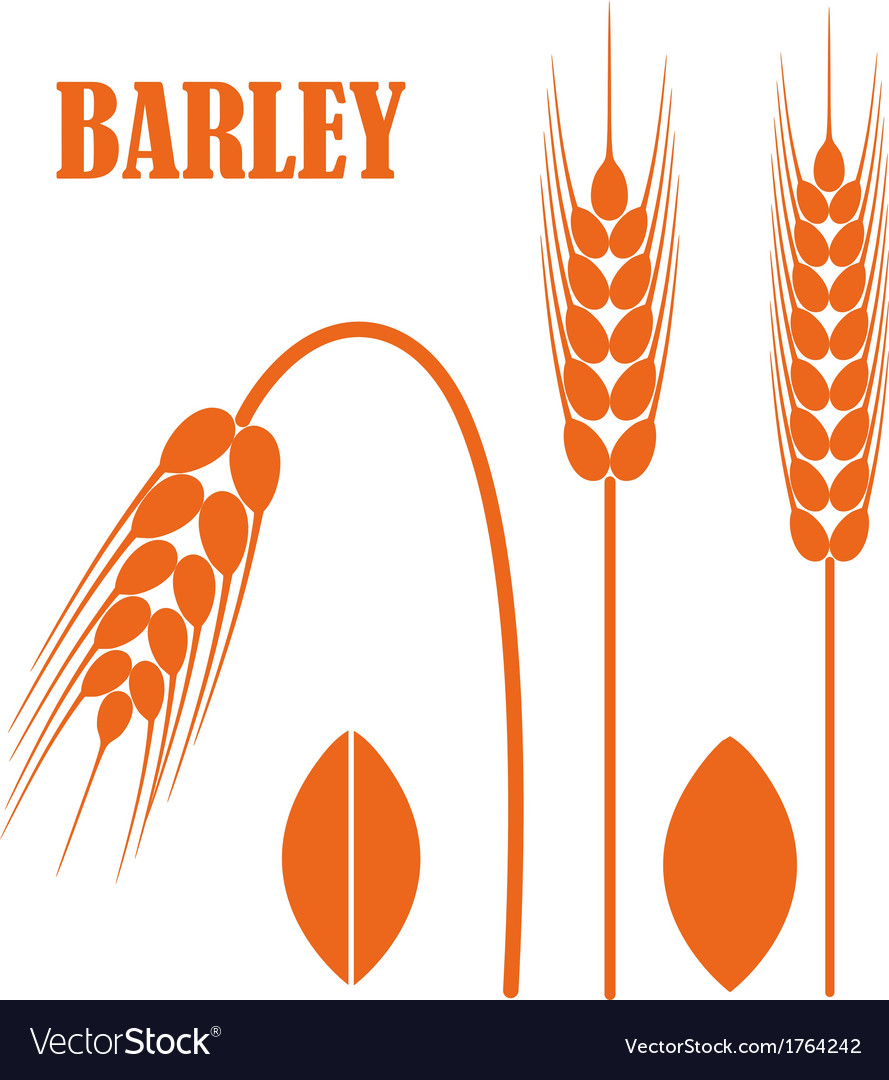 Barley vector | Price: 1 Credit (USD $1)