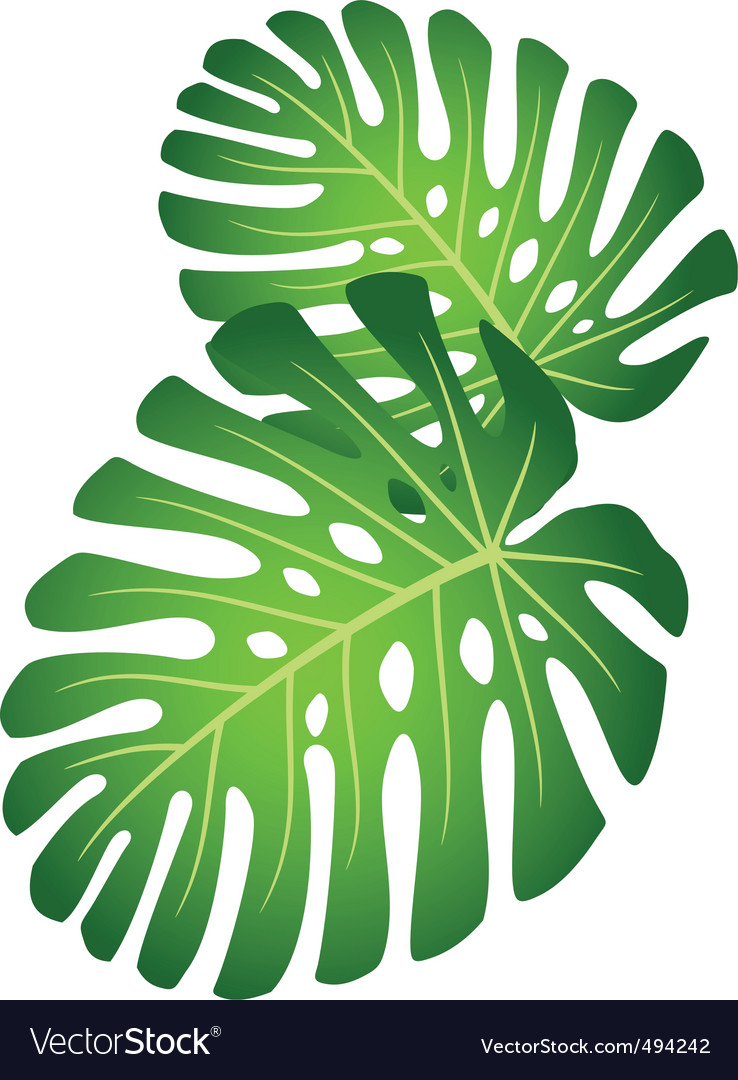 Leaves of tropical plant monster vector | Price: 1 Credit (USD $1)