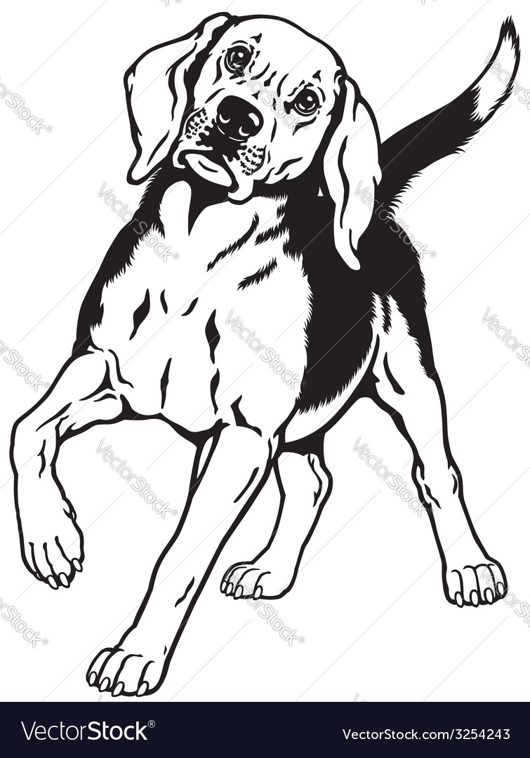 Beagle hound black white vector | Price: 1 Credit (USD $1)