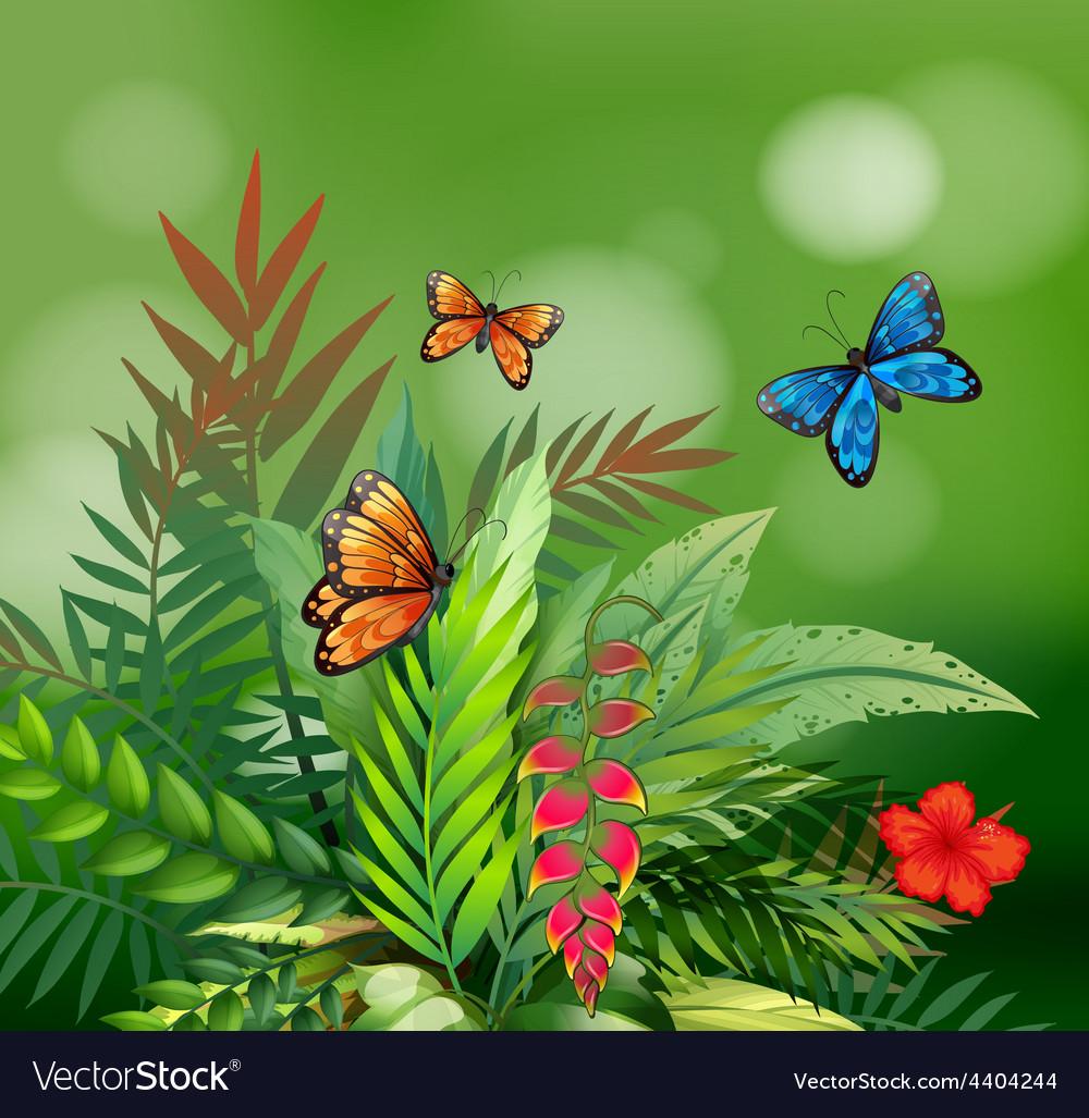 Butterflies vector | Price: 3 Credit (USD $3)