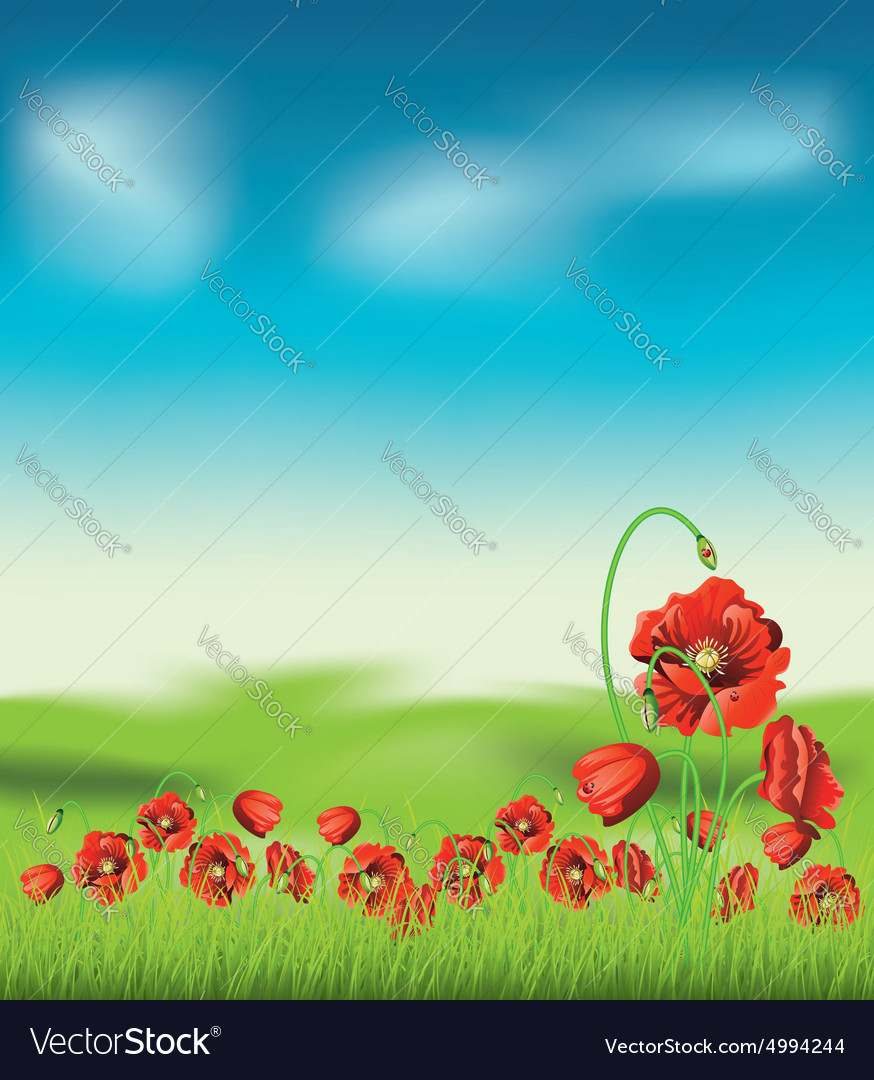 Poppy with grass4 vector