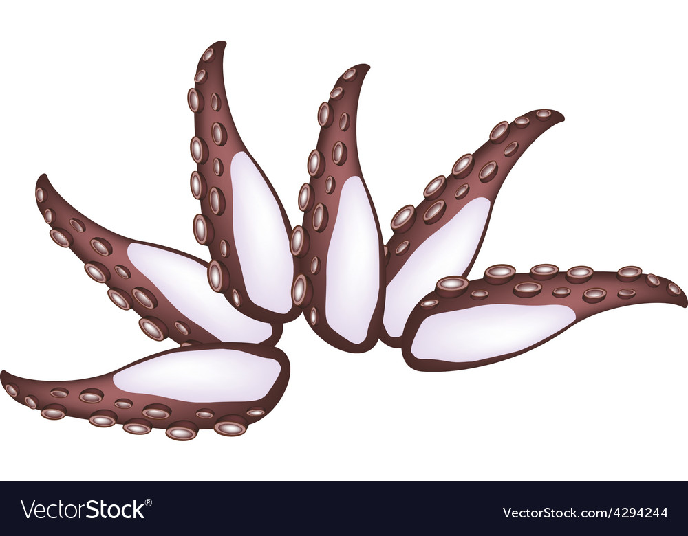 Tako sashimi or squid sashimi on white vector | Price: 1 Credit (USD $1)