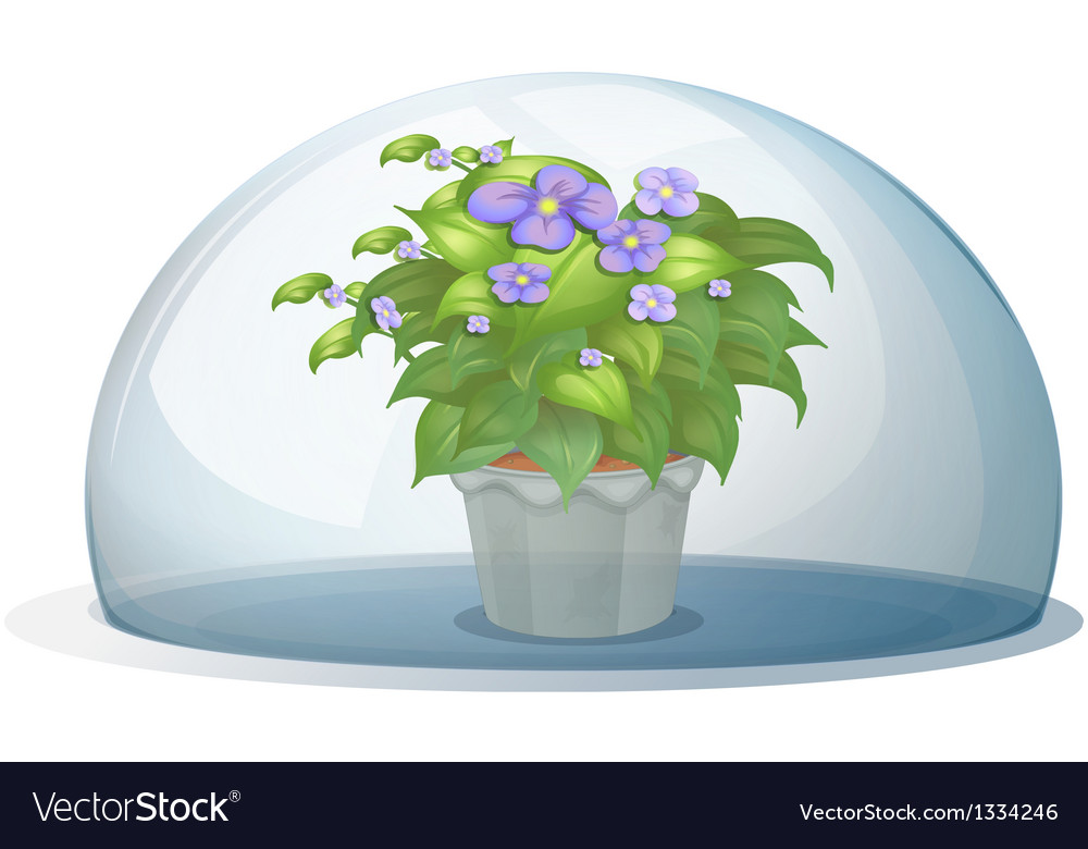 A dome with a pot with plant vector | Price: 1 Credit (USD $1)