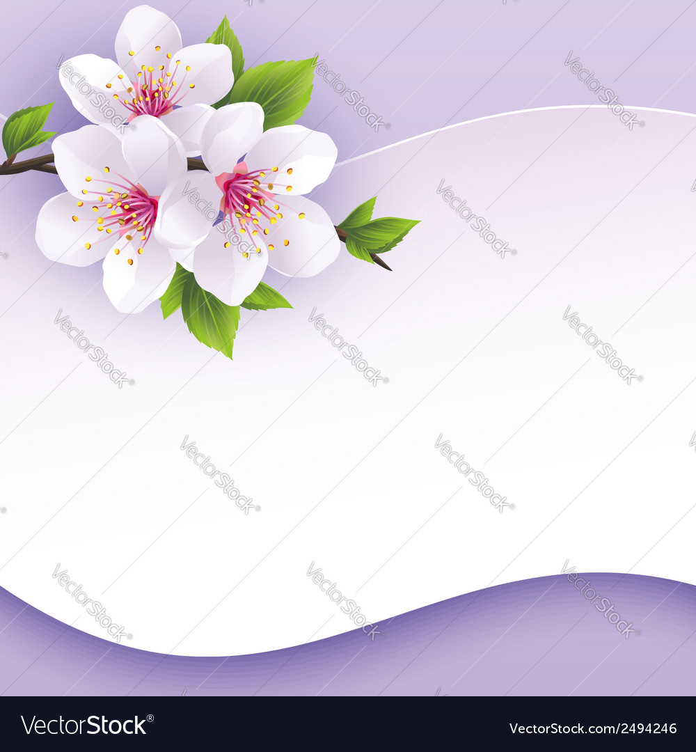 Greeting or invitation card with branch of sakura vector | Price: 1 Credit (USD $1)
