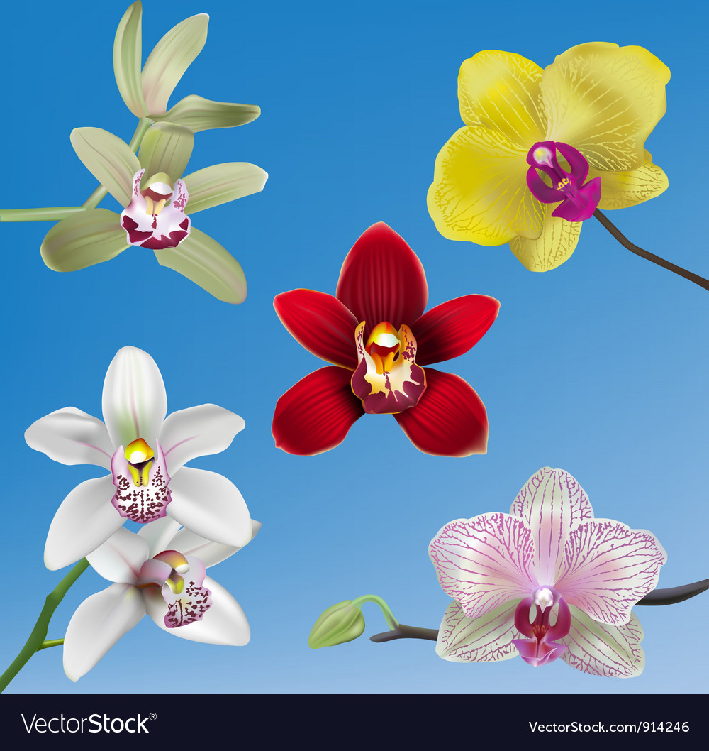 Orchid collection vector | Price: 3 Credit (USD $3)