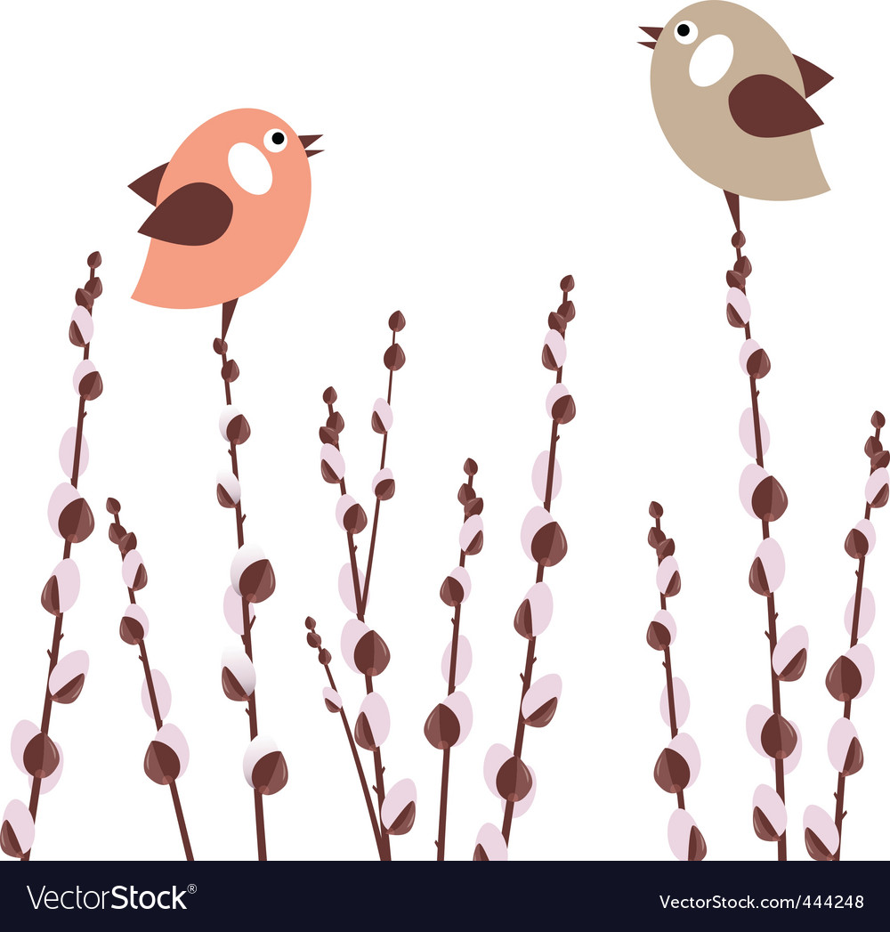 Pussy willow branches vector | Price:  Credit (USD $)