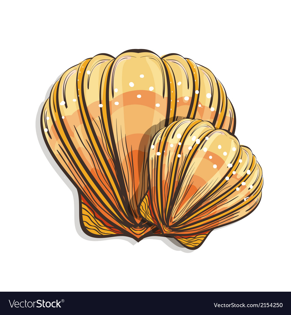 Scallop seashell vector | Price: 1 Credit (USD $1)