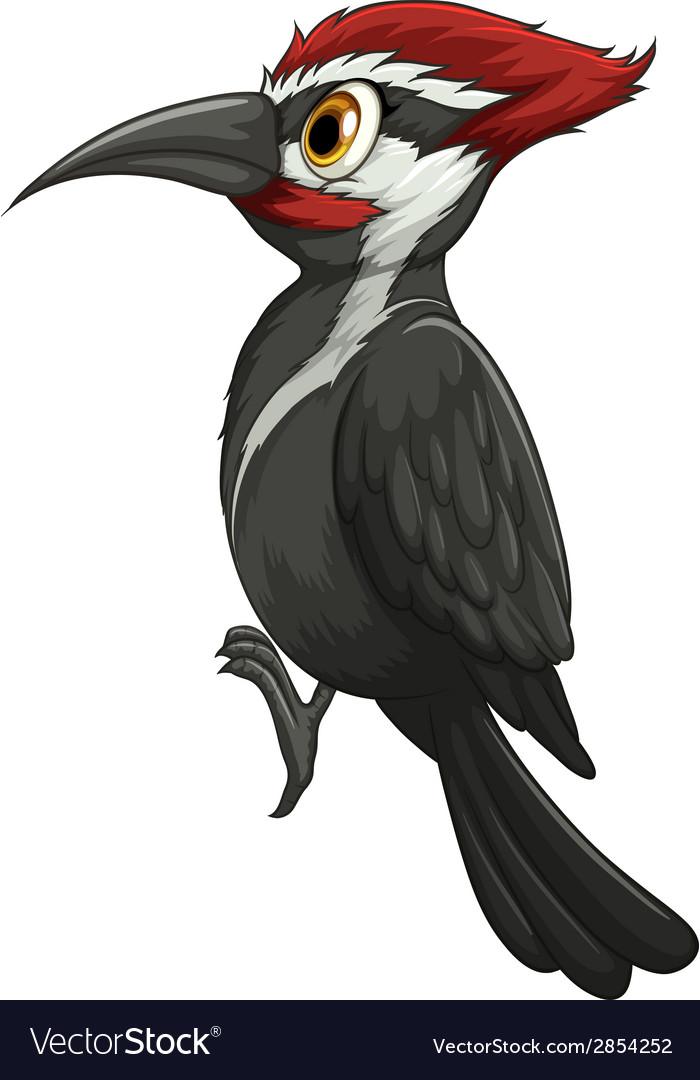 Woodpecker vector | Price: 1 Credit (USD $1)