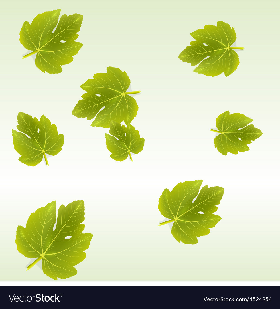 Fig leaves background vector | Price: 1 Credit (USD $1)