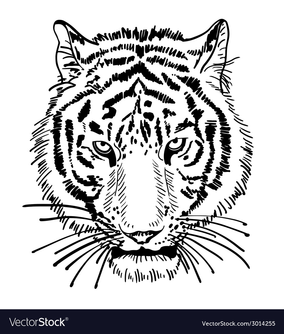 Artwork of tiger face portrait head silhouette vector | Price: 1 Credit (USD $1)