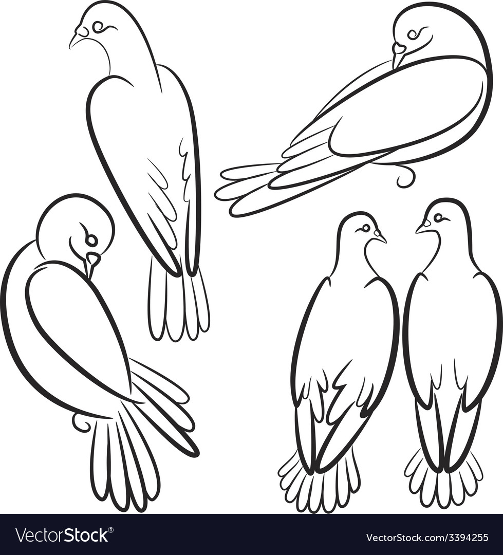 Black and white contours of four pigeons that sit vector | Price: 1 Credit (USD $1)