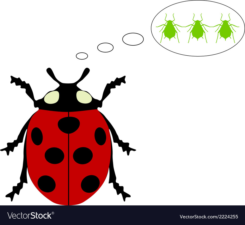 Ladybird diet vector | Price: 1 Credit (USD $1)