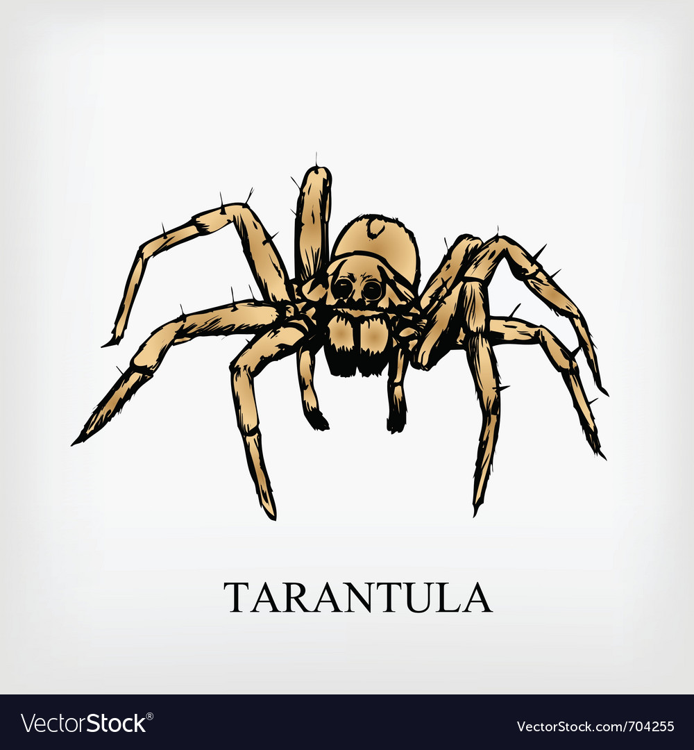 Tarantula spider vector | Price: 1 Credit (USD $1)