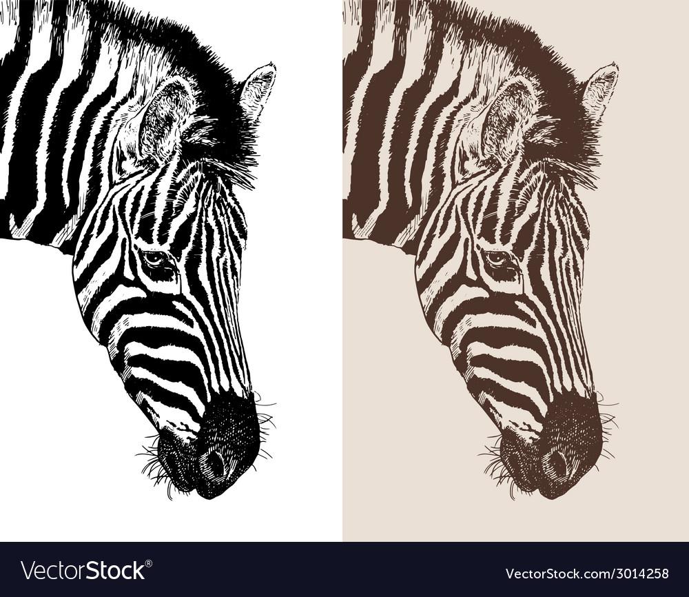 Artwork head profile zebra vector   Price: 1 Credit (USD $1)