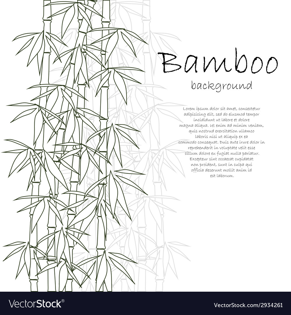 Bamboo background white vector