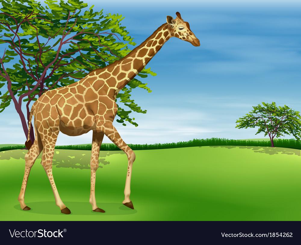 Giraffe vector | Price: 3 Credit (USD $3)