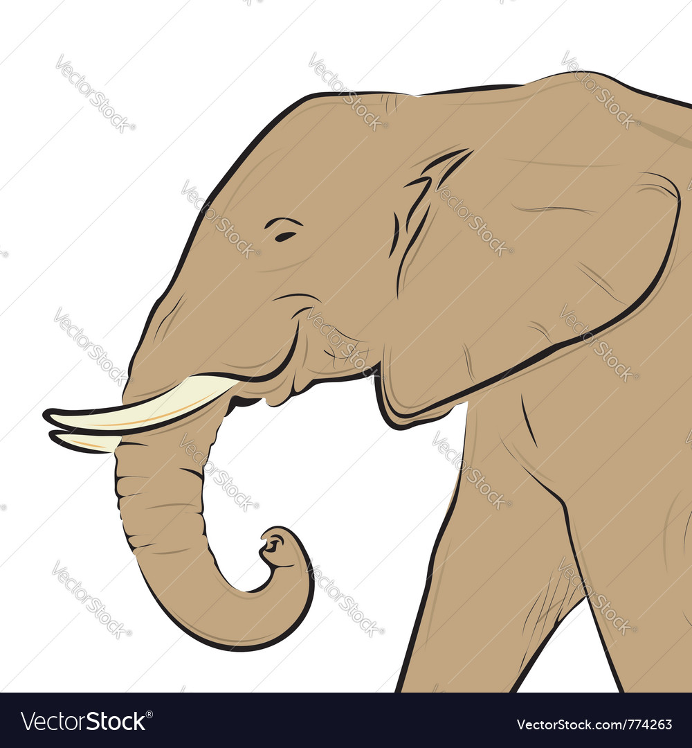 Elephant head drawing isolated on white vector | Price: 3 Credit (USD $3)