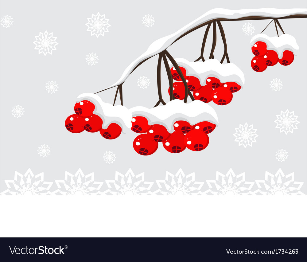 Winter background with red berries and snow vector | Price: 1 Credit (USD $1)