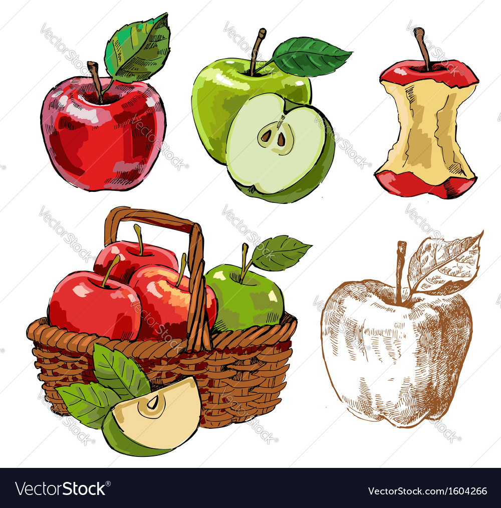 Hand drawn apples vector | Price: 1 Credit (USD $1)