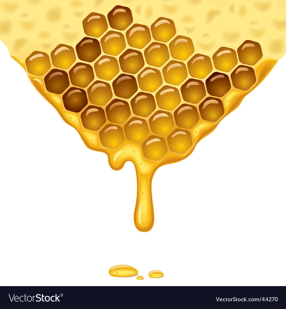 Flowing honey vector | Price: 1 Credit (USD $1)