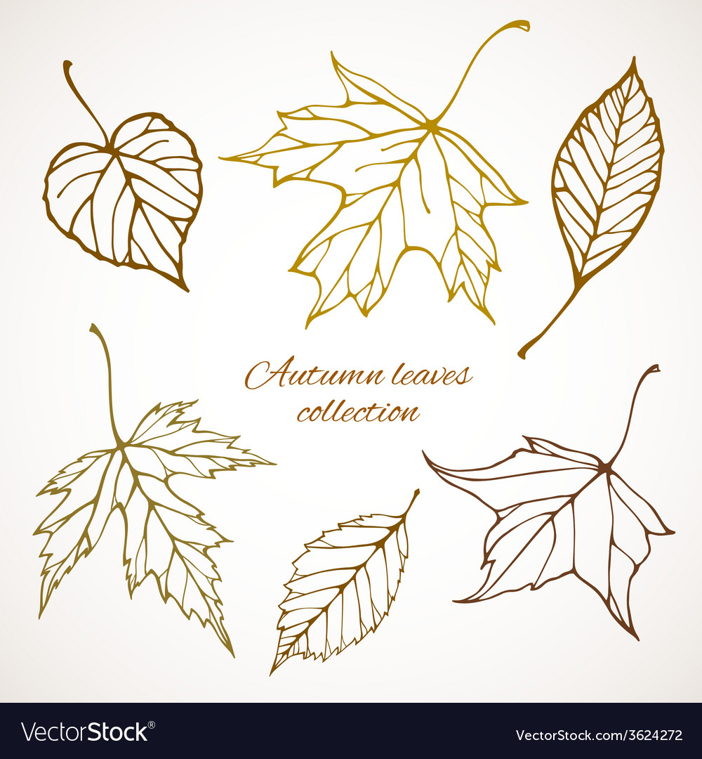 Set of outline autumn leaves vector | Price: 1 Credit (USD $1)