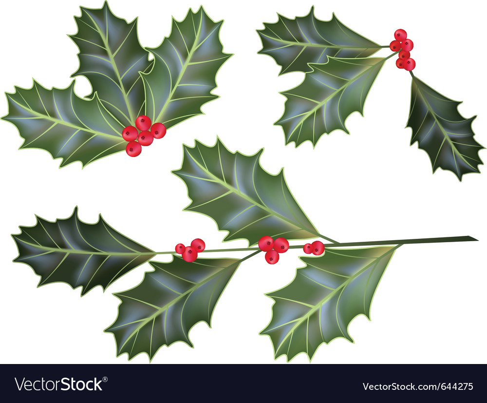 Holly leaves and berries vector | Price: 1 Credit (USD $1)