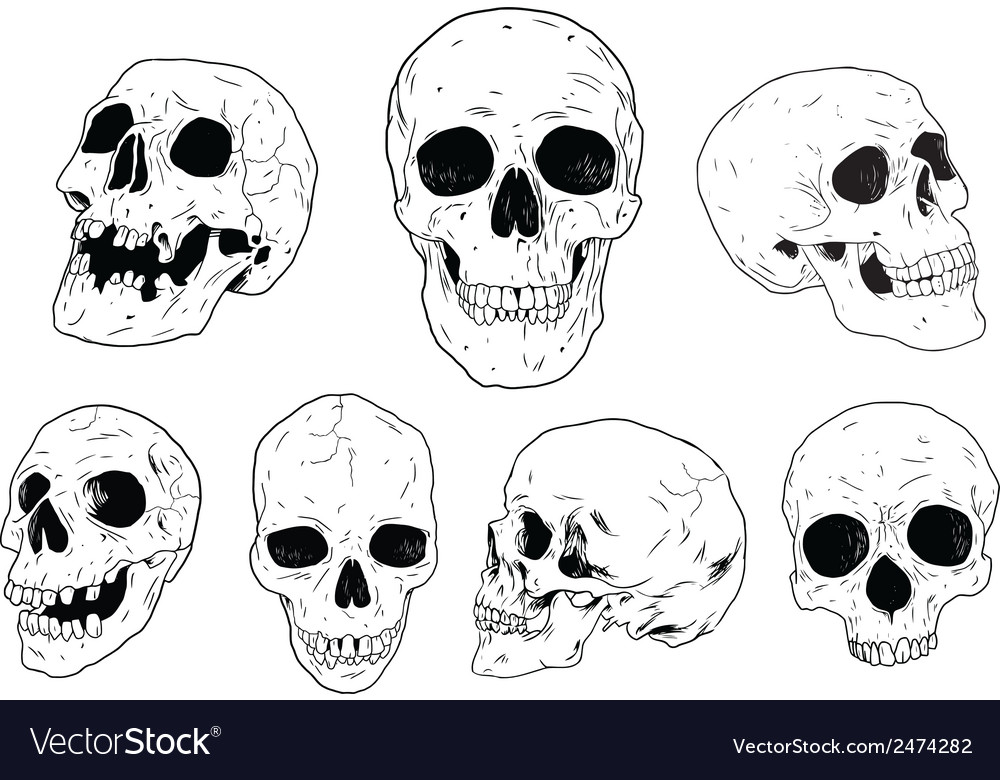 Skulls - hand drawn vector | Price: 1 Credit (USD $1)