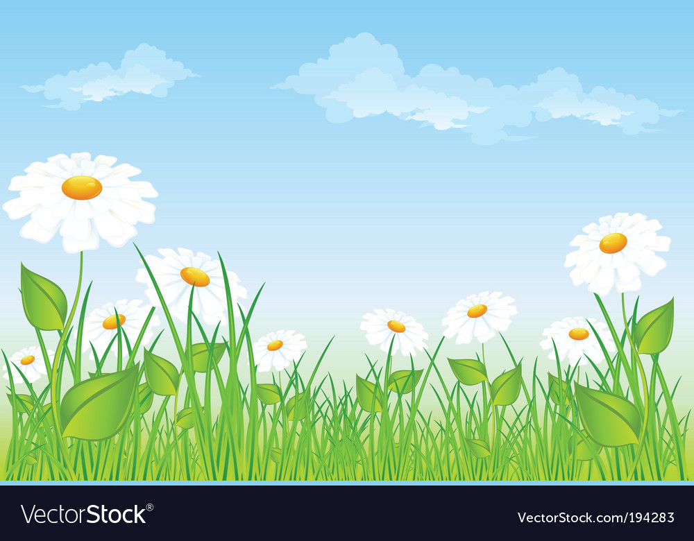 Field of daisies vector | Price: 1 Credit (USD $1)