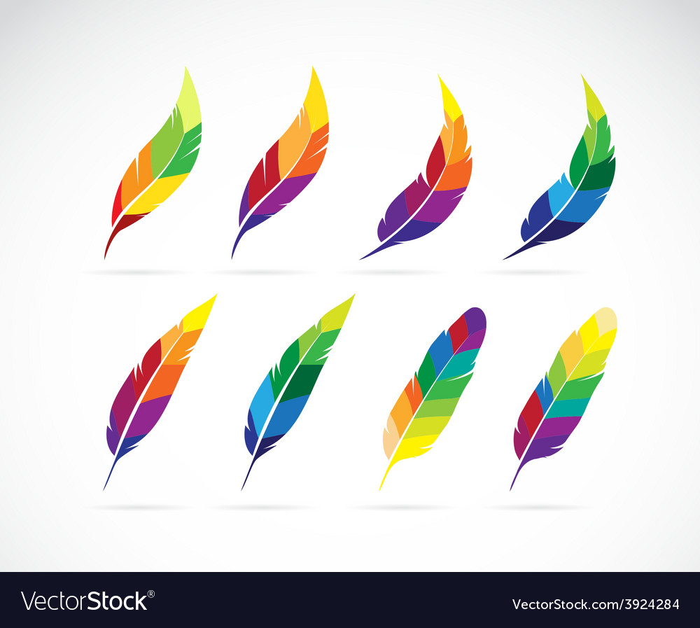 Group of an feathers design vector | Price: 1 Credit (USD $1)