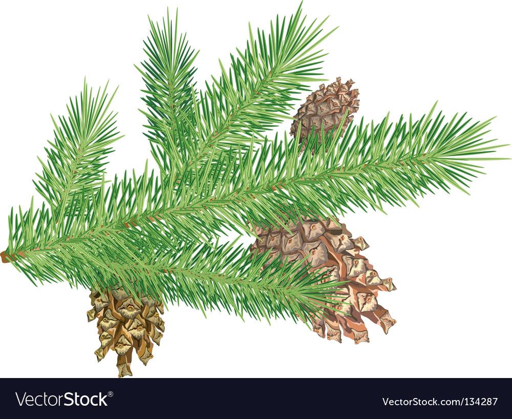 Pine cones vector | Price: 1 Credit (USD $1)