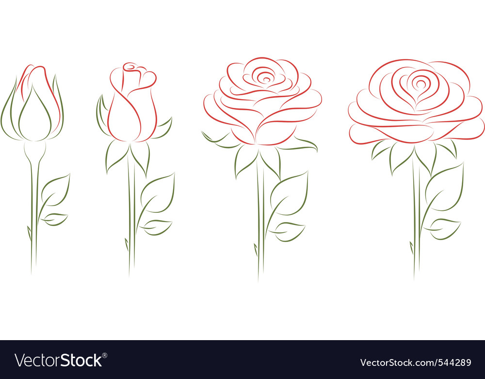 Blooming roses vector | Price: 1 Credit (USD $1)