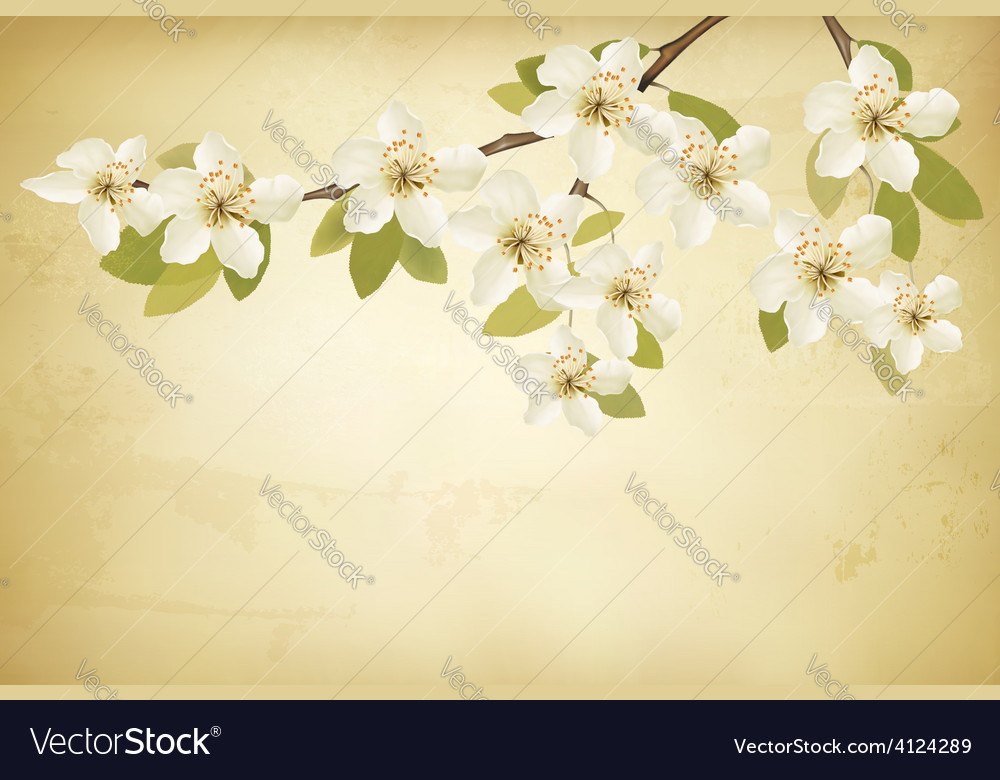 Spring branches with flowers on vintage background vector | Price: 3 Credit (USD $3)