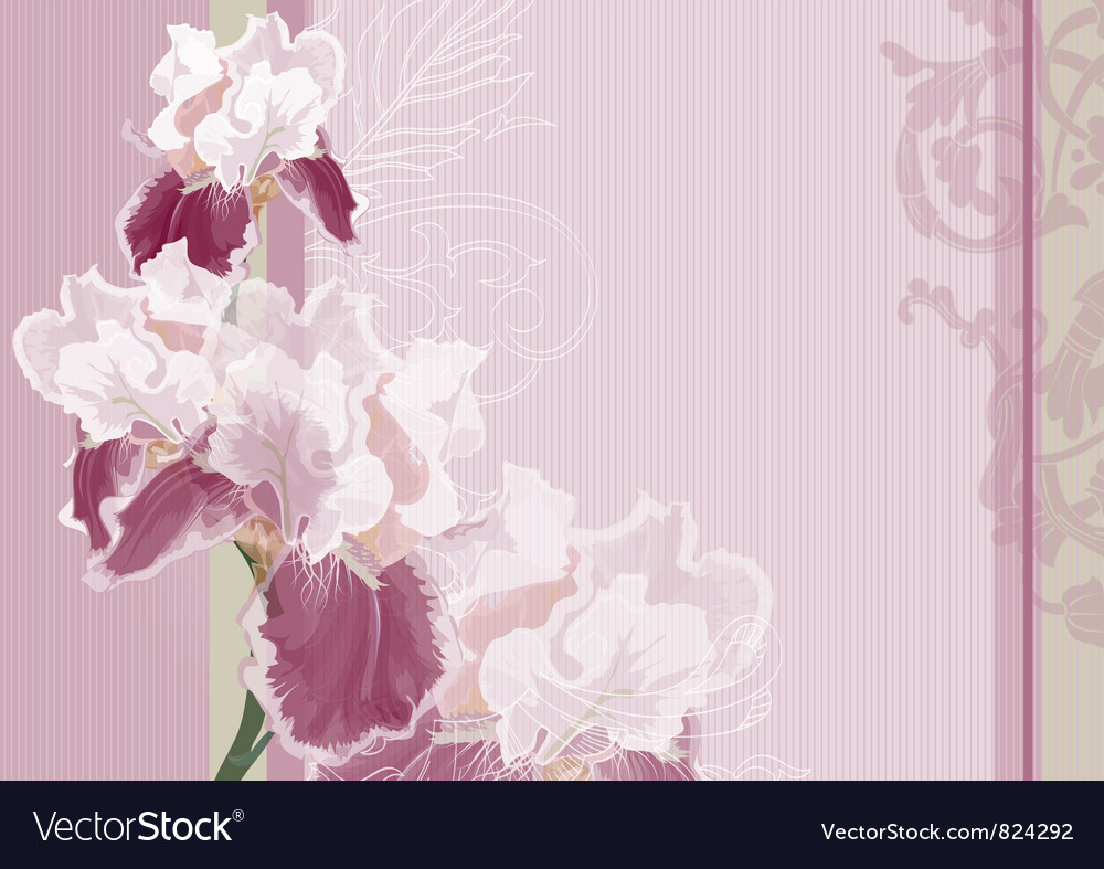 Irises on a pink background vector | Price: 1 Credit (USD $1)