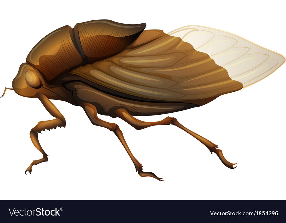 Cicadidae vector | Price: 1 Credit (USD $1)