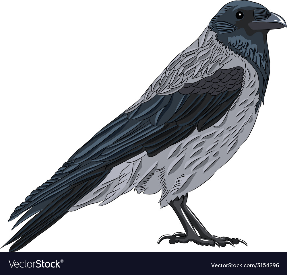 Crow vector | Price: 1 Credit (USD $1)