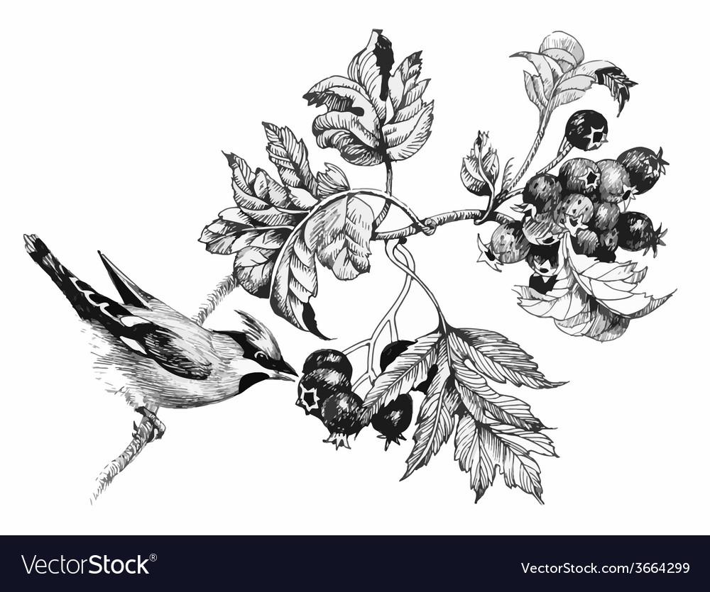 Wild exotic bird on twig vector | Price: 1 Credit (USD $1)