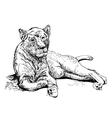 Original artwork old lioness black sketch drawing vector