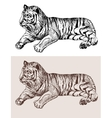 Original artwork tiger black sketch drawing animal vector