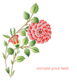 Ottoman red roses flower series vector