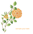 Ottoman yellow roses flower series vector