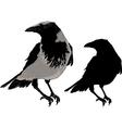Black crows vector