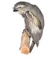 Tawny frogmouth owl vector