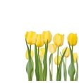 Tulips isolated on white background eps 8 vector