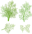 Bunch fresh dill herb isolated set vector