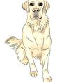 Sketch dog breed white labrador retrievers vector